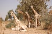 Niger 6