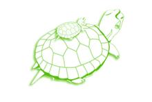 bassin de récupération des tortues de Floride
