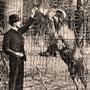 historique du zoo de Lyon