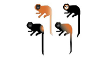 Lion Tamarin Brazil Fund