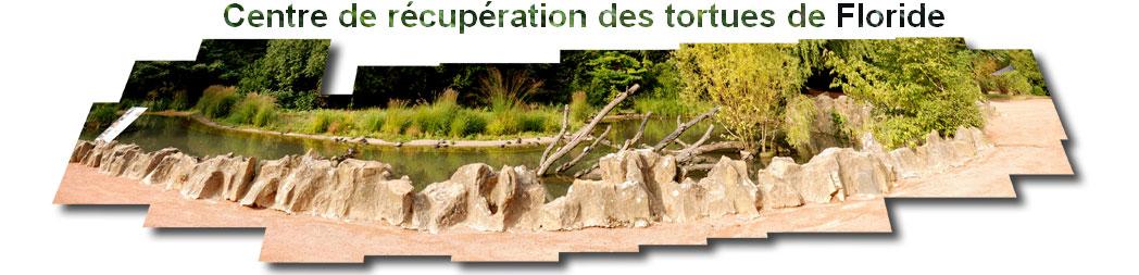 bassin tortues - Jardin zoologique