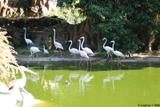 flamants roses 1
