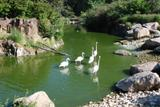 flamants roses 5