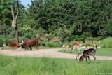 les animaux de la plaine africaine
