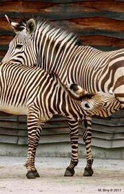 http://www.zoo.lyon.fr/static/zoo/contenu/photos%202011/.resize/180_281_Z10ret.jpg